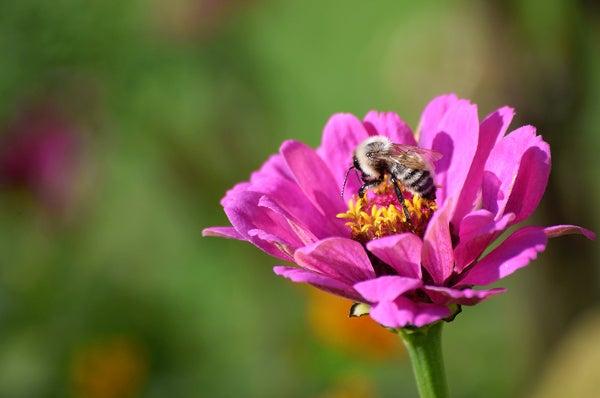 bee landing on nectar