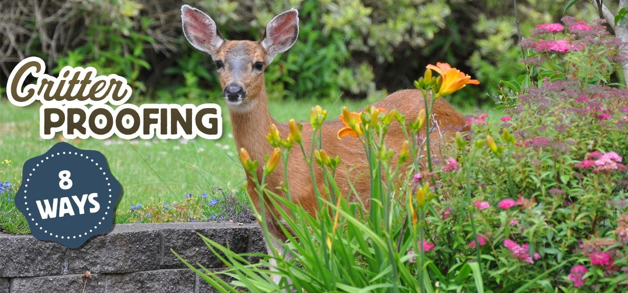 critter proofing deer in a garden