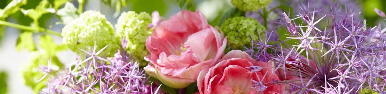 best flower bulbs