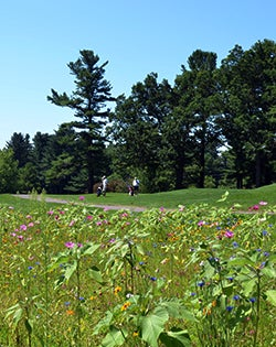 Wildflowers on a Golf Course