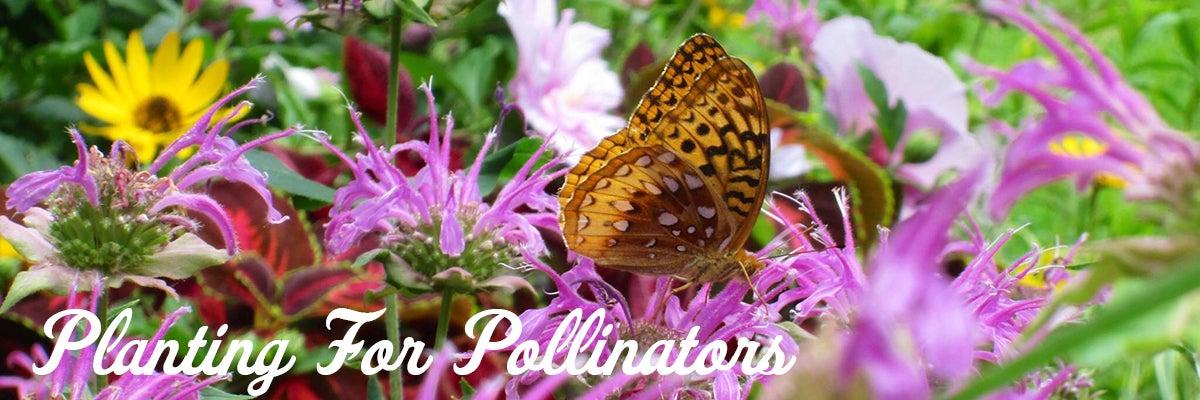 Planting For Pollinators Attracting Hummingbirds Bees