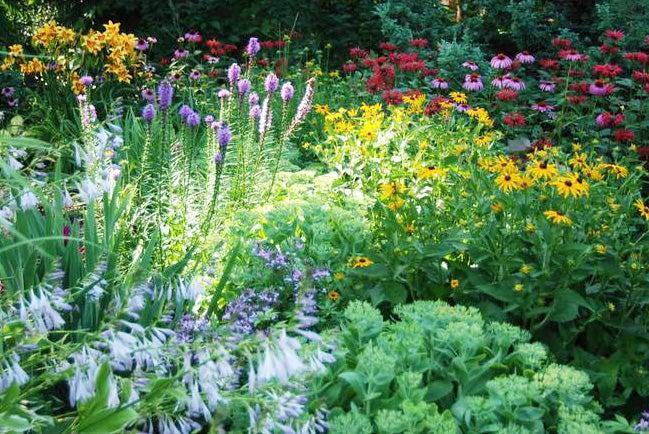 A garden with Daylilies, Bee Balm, Black Eyed Susan, Echinacea, Hosta, and Sedum