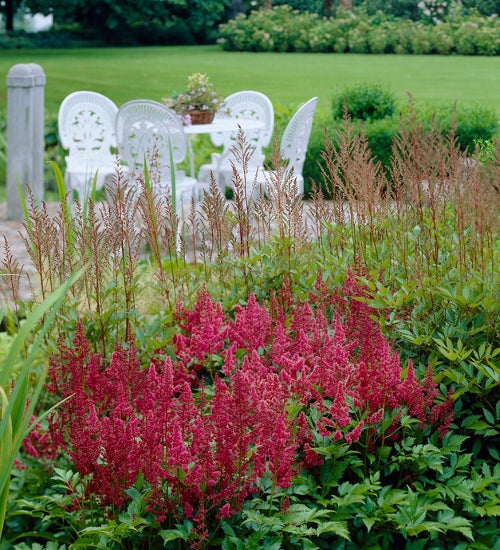 astilbe plumes in the border