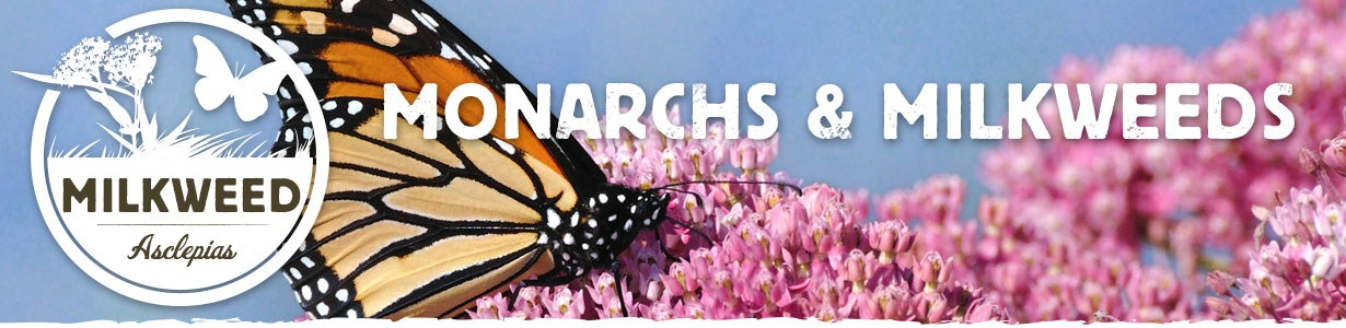 Monarch and Milkweed Banner
