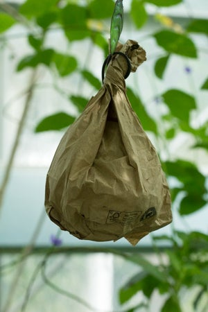 wasp trap paper bag