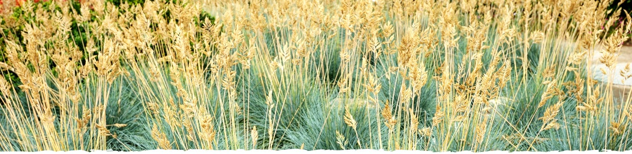 all about ornamental grass banner
