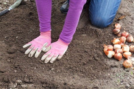 how to plant tulips press soil gently