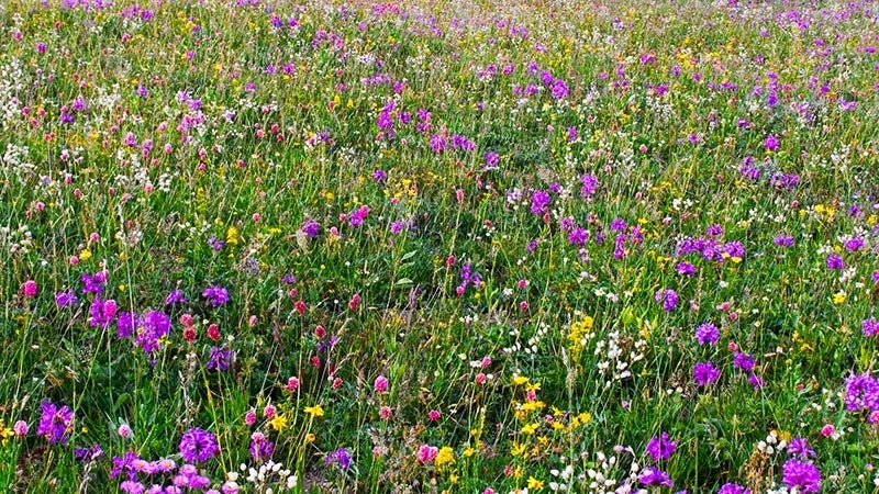 Top perennial plants for wildflower meadows mightylinksfo Gallery