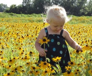 child in a field of black eyed susannes