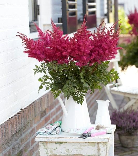 Maggie Daley astilbe in a vase