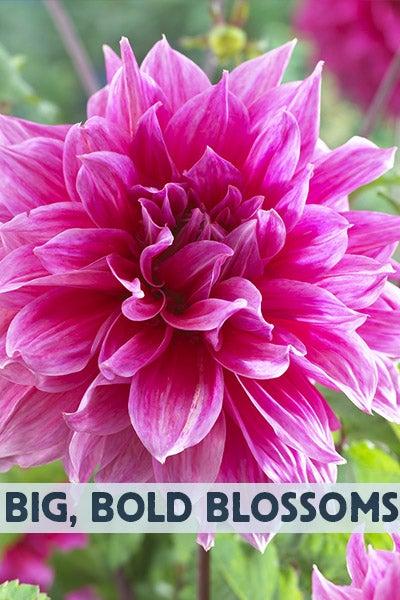 Texas Bluebonnet Wildflower Seeds