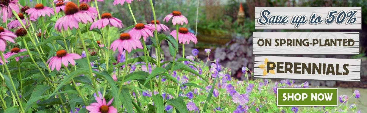 Save Up To 50% On Perennials