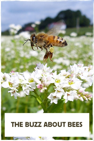 """""""The Buzz About Bees"""" Bee with White Wildflower"""