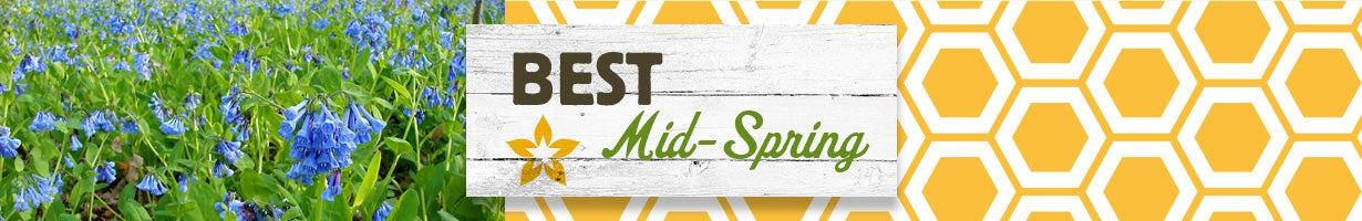 best mid-spring
