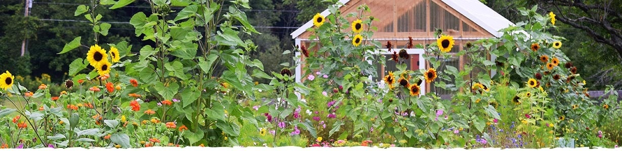 bird garden with native flowers