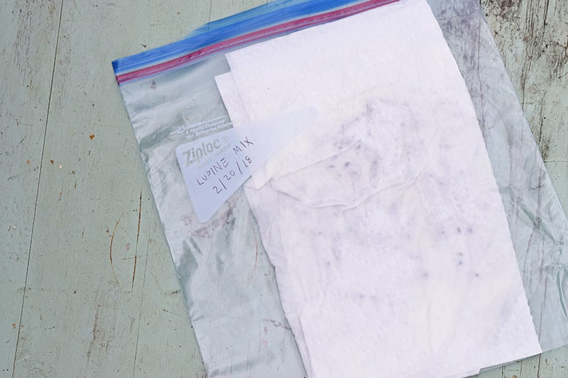 seeds in wet paper towel in a plastic bag