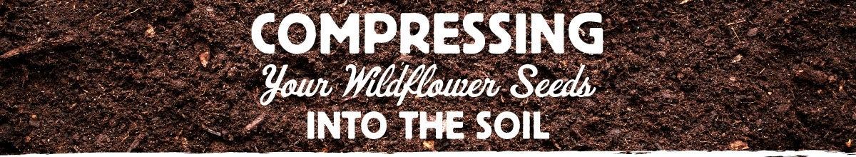 compressing your wildflower seeds into the soil