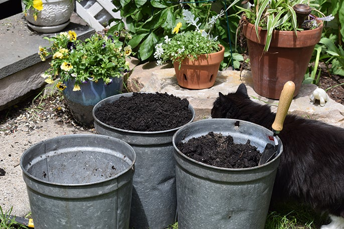 Containers filled with soil