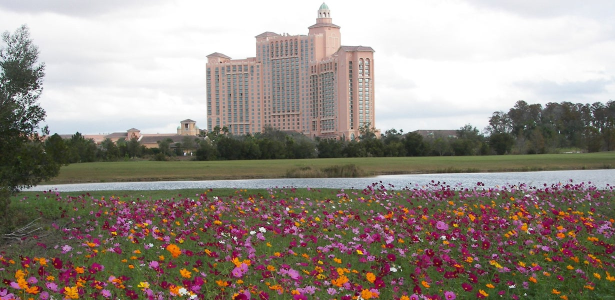 field of cosmos in front of the ritz carlton