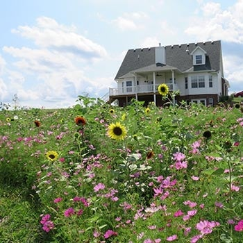 Wildflower meadow in front of house