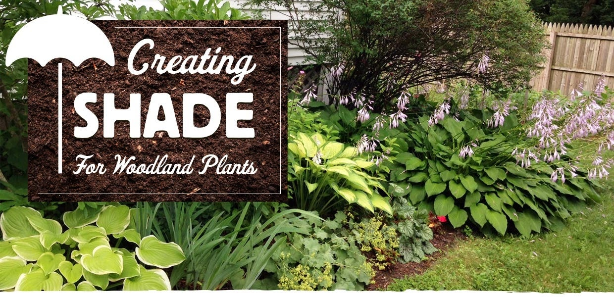 creating shade for woodland plants