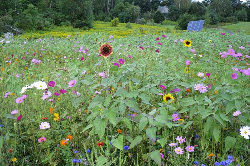 planting a slope - wildflowers in August