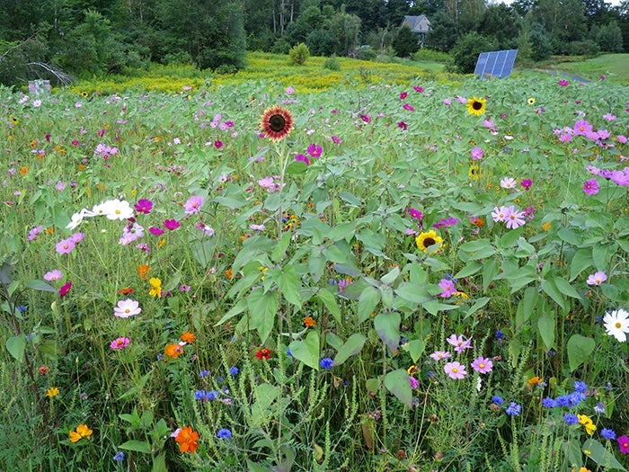 planting a slope - mixed wildflowers