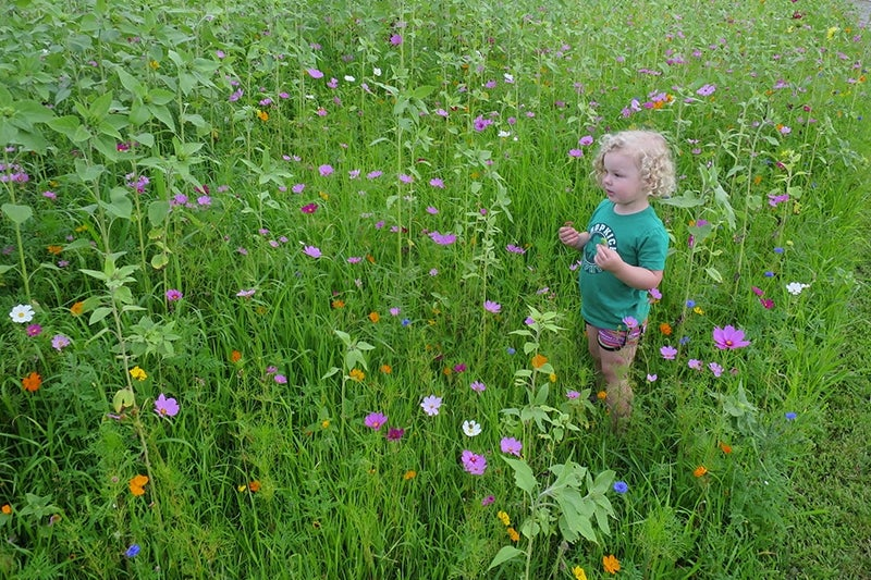 planting a slope - abby in the meadow