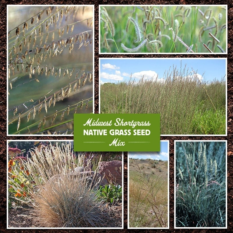 Midwest Native Grass Seed Mix
