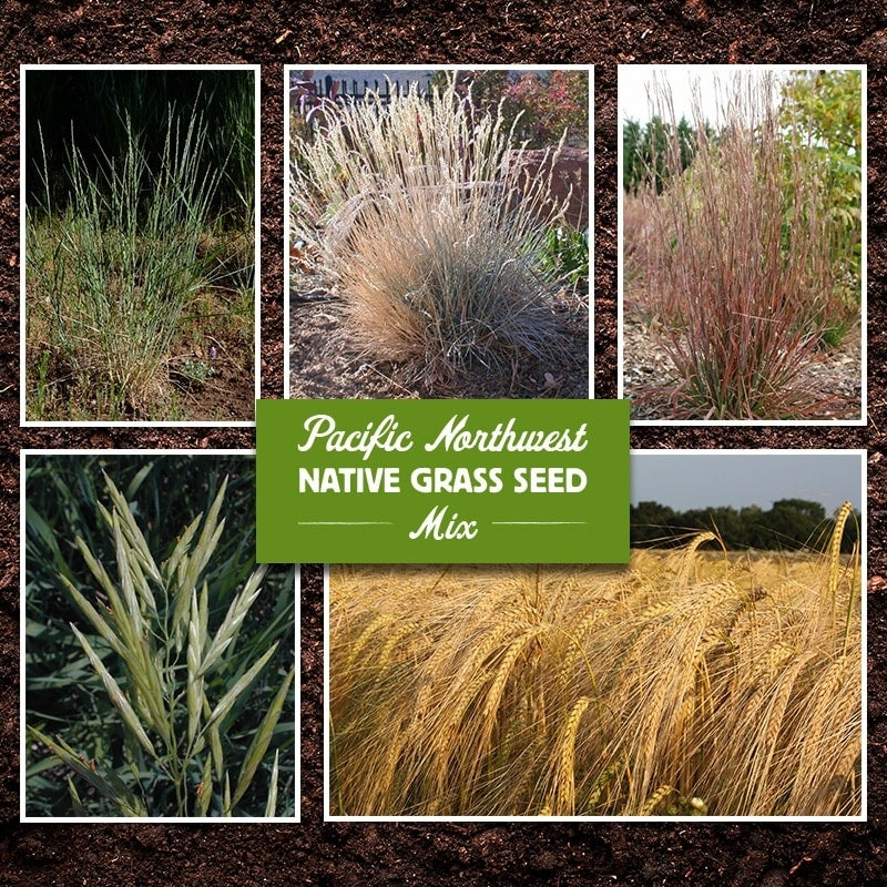 Pacific Northwest Native Grass Seed Mix