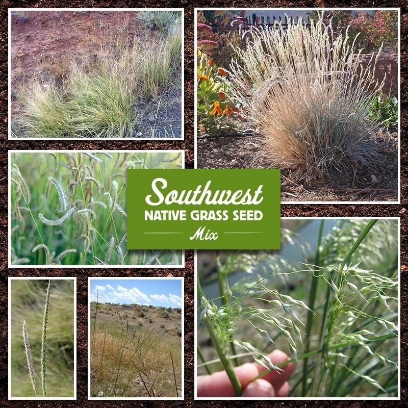 Southwest Native Grass Seed Mix