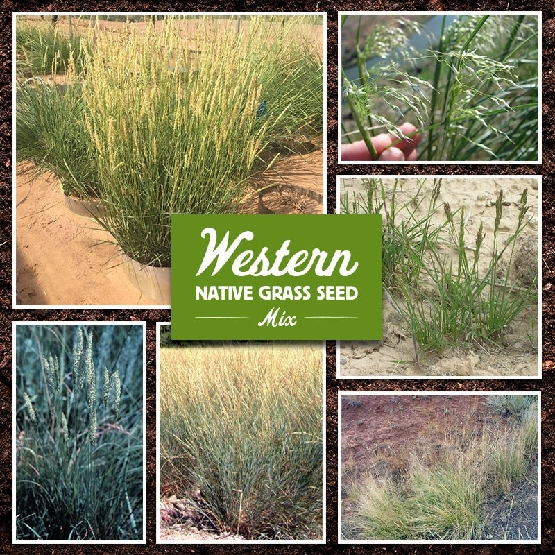 Western Native Grass Seed Mix