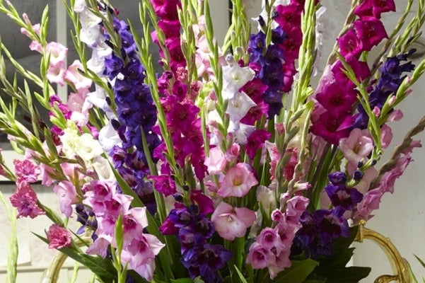 Gladiolus represent faithfullness with their stark features