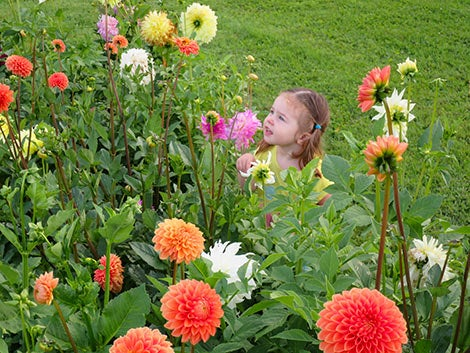 girl smelling dahlia blooms