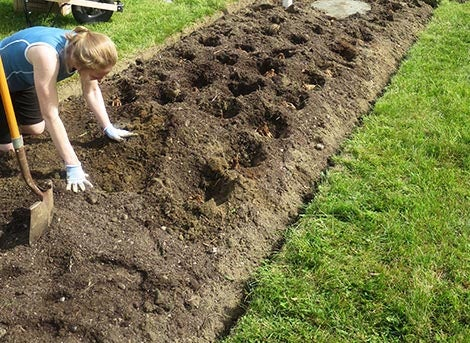 woman preparing soil bed for dahlia