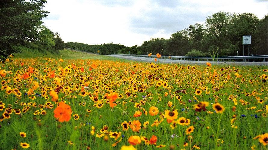 DOT Wildflower Fields