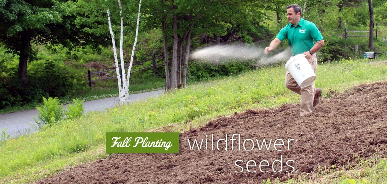 fall planting wildflower seeds