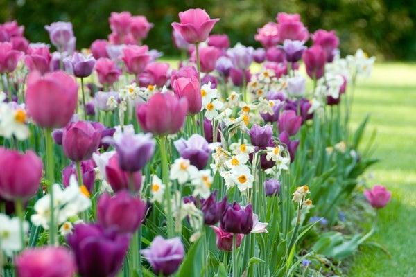 flower bulb cutting garden