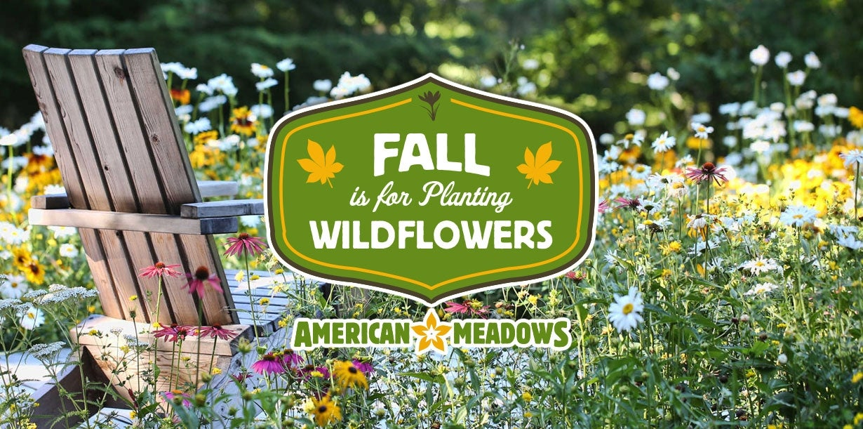 fall is for planting wildflowers