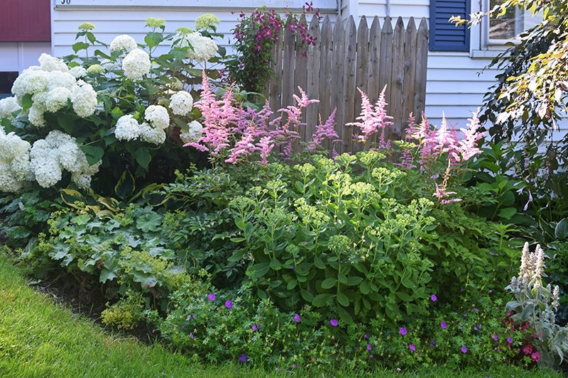 A Well Designed Shade Garden | American Meadows