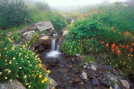 stream running through a garden