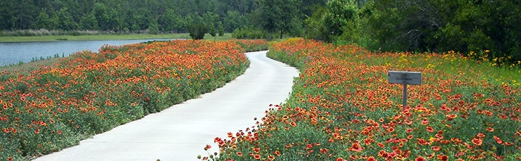 wildflower field