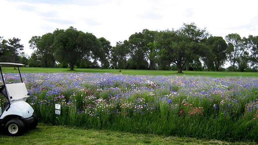 Golf Course Wildflower Fields