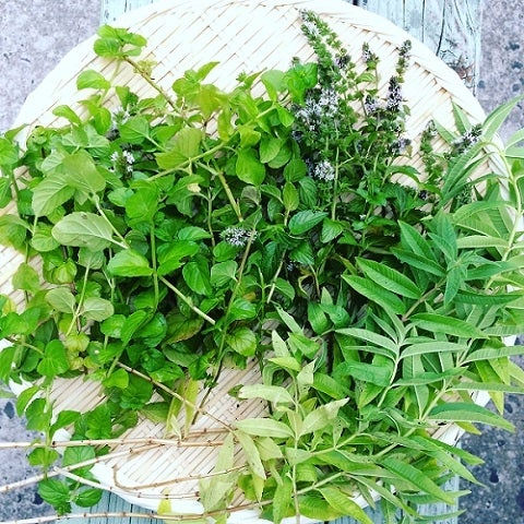 picked herbs from the garden