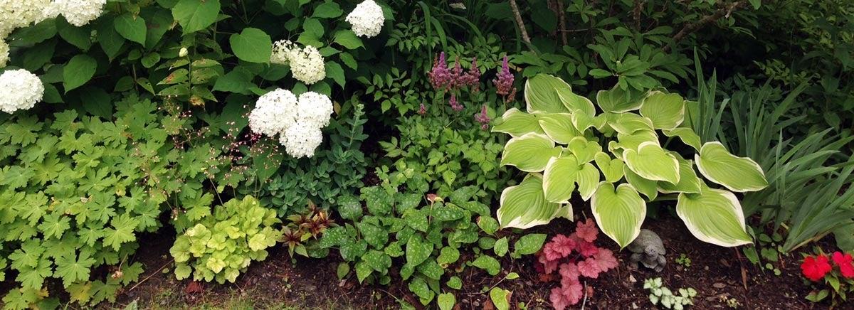 Hosta, Coral Bells, Hydrangea in Shade Garden