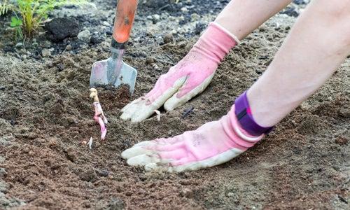 pressing soil