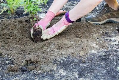 planting bee balm