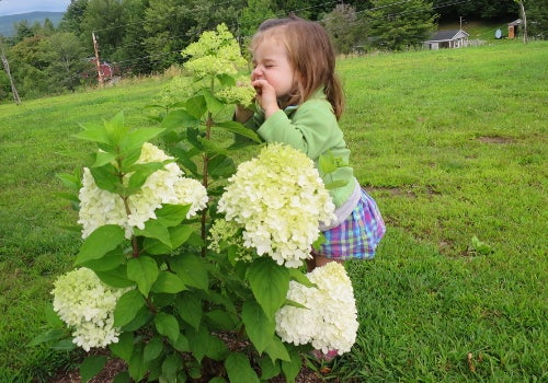 Child with Fragrant Hydrangea
