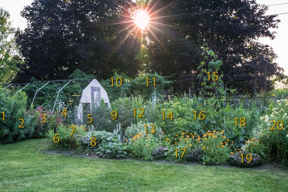 labelled monarch garden