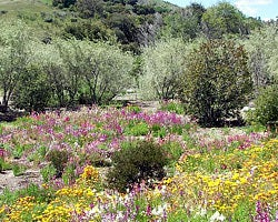 yellow wildflower meadow california